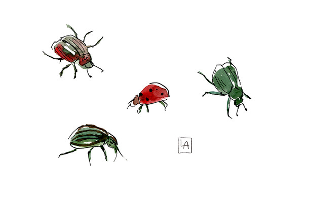 Summer Beetles