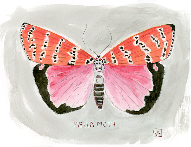 Bella Moth