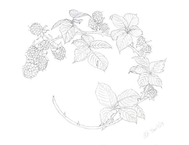 Blackberry Wreath