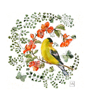 Yellow Finch on Quince