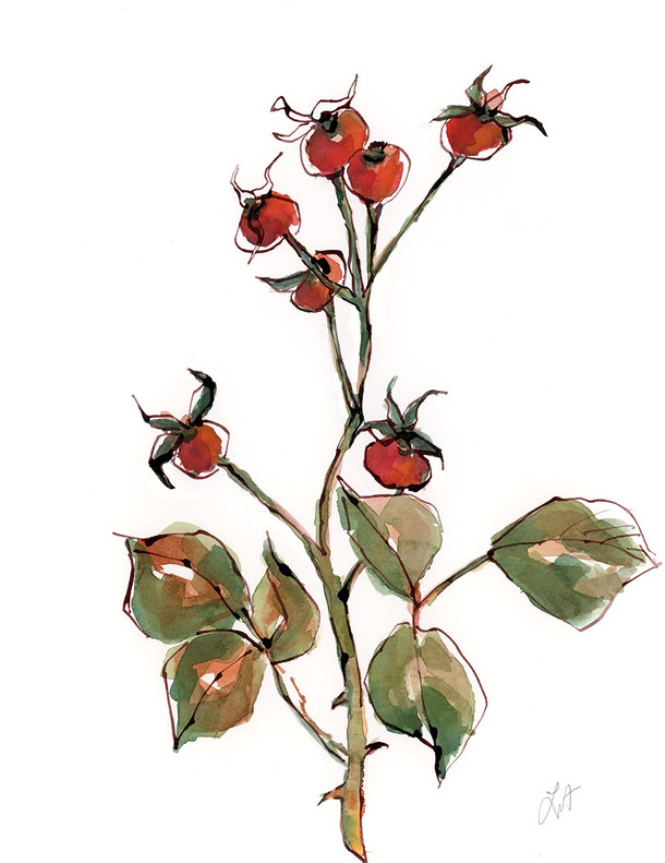 Winter Rose Hips