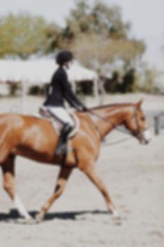 animal-blur-equestrian-902999.jpg