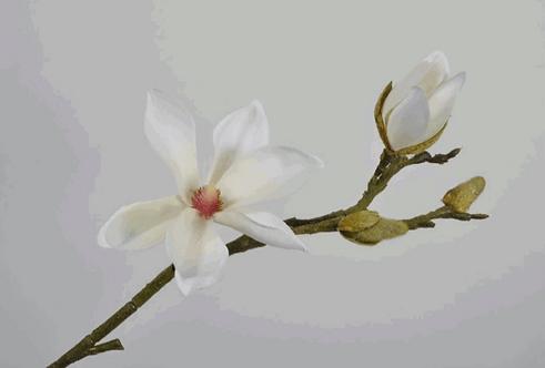 MAGNOLIA SPRAY CREAM 59 cm