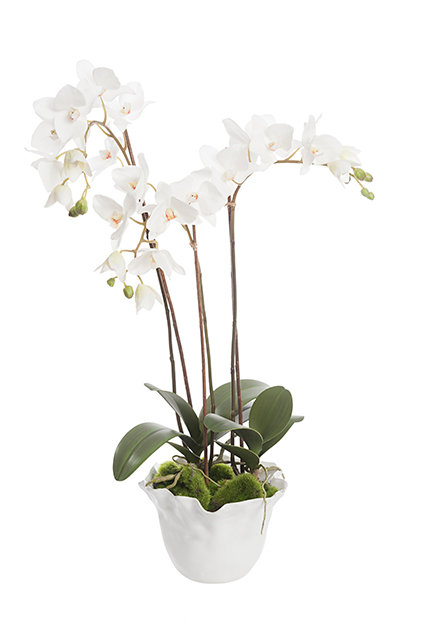 Orchid in ceramic pot