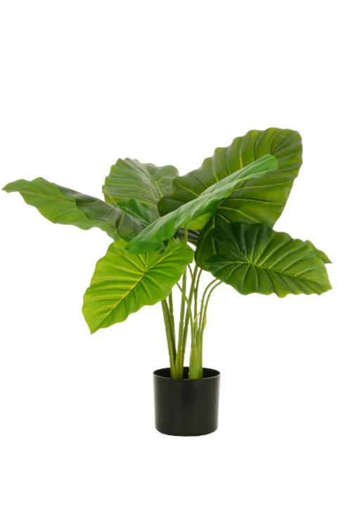 Philo Plant x 9 w/Pot 68cm