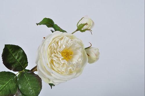 ROSE STEM WHITE 57 cm