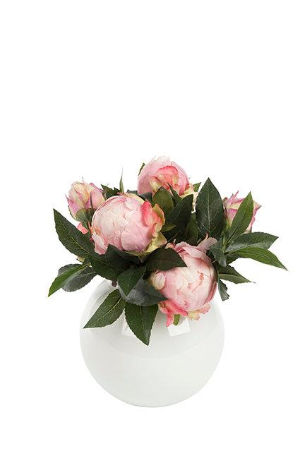Peonies in round ceramic vase white