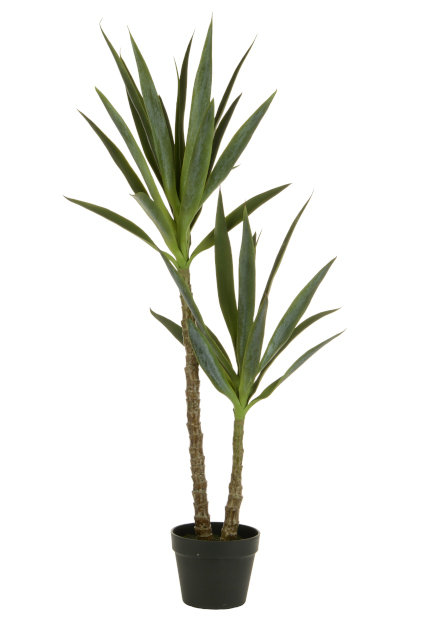 Yucca Plant x 2 in Pot 112cm