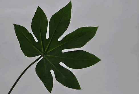 LEAF FATSIA GREEN 54 cm