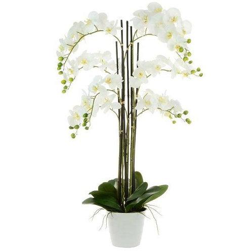 Phalaenopsis x9 in white pot