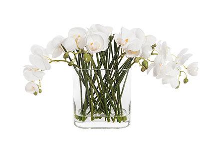 Phalaenopsis in Glass 30cm