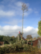 Broadleaf Tree Care Tree Surgeons Worcestershire Herefordshire Gloucestershire