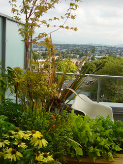 terrace mount pleasant