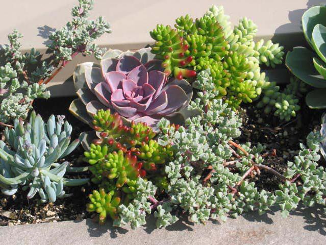 terrace planting