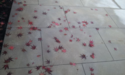 leaves on new concrete