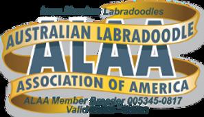 Iowa Meadow Labradoodles ALAA Internatio