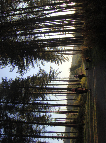 Newborough Forest Feb 2019.mp4
