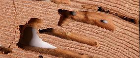 termite repair san jose