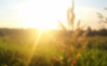 Sonnenaufgang Wiese