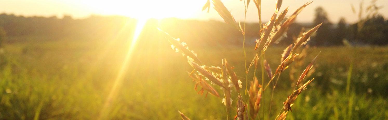 Agronegocios, invertir en ganado, invertir en tierra, uruguay
