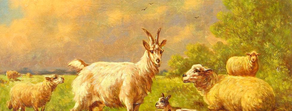 Troupeau de chèvre