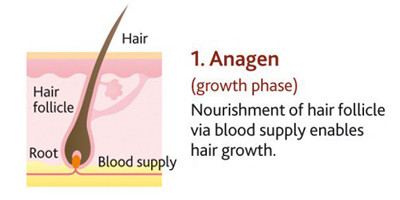 Hair Thinning, Hair Loss and Hair Growth for Women.