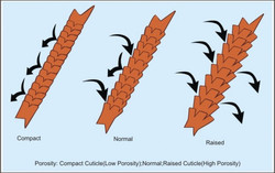porosity of hair