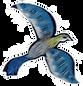 bluebird_edited.png