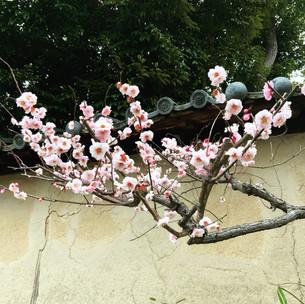 春に神差す京阪電車