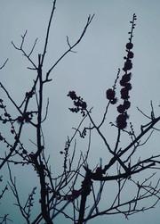 梅の香りで呼び出されるもの