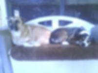 2summer dogs.jpg