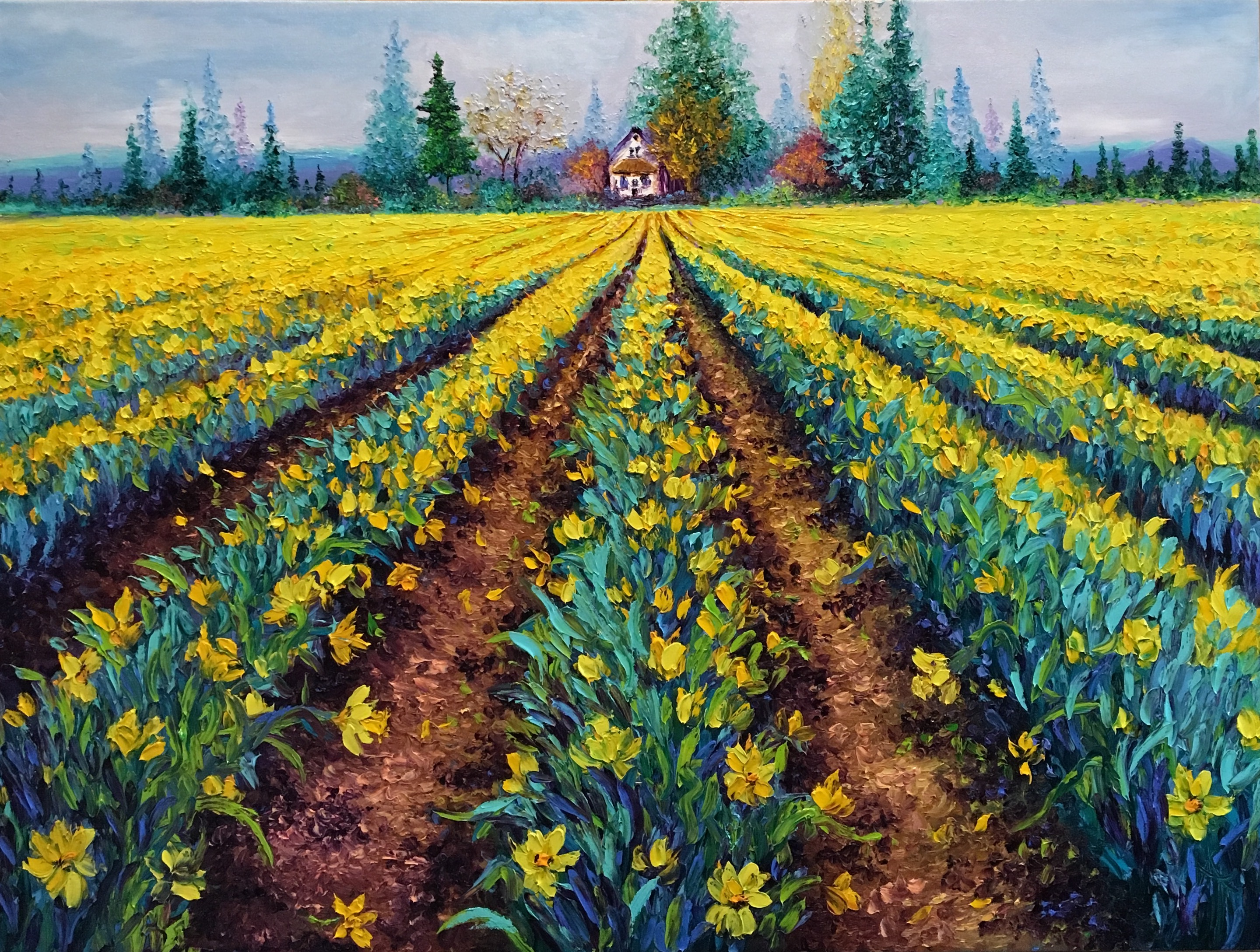 VALIANT FIELDS OF DAFFODILS / 30X40