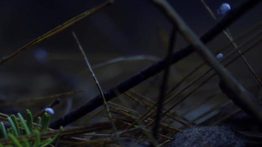 Wild Canadian Year - Spring: Salamanders, CBC