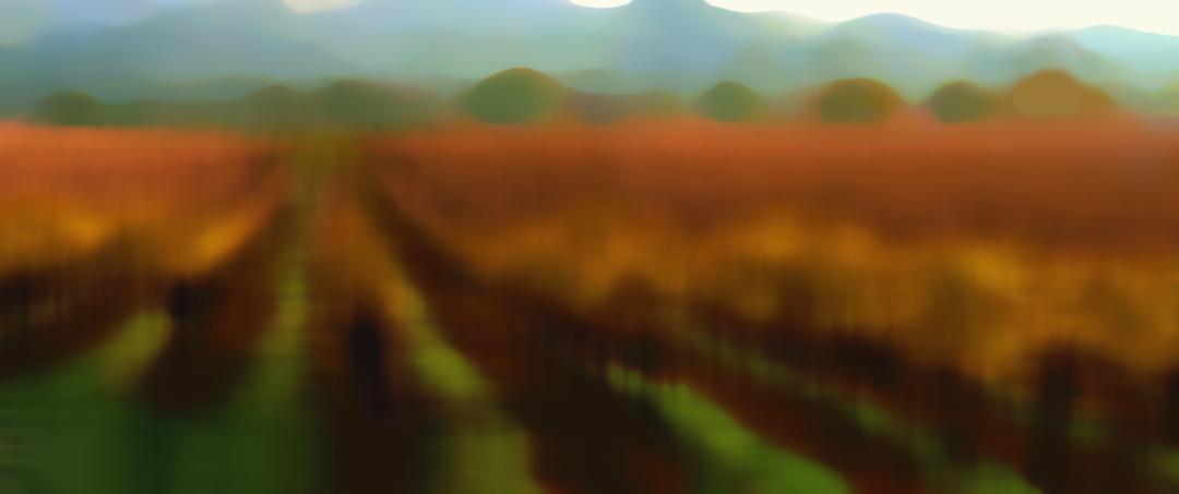 vineyard-bkg-blur-15x6.29-72dpi.png