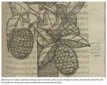 """O """"Tratado das Drogas"""", uma janela para a natureza da Ásia por Teresa Nobre de Carvalho"""