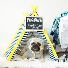 yellow frame tent.jpg