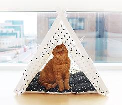 white + black tent 2.jpg