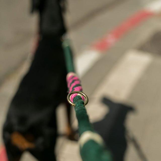 דובה עם רצועה ירוקה ורודה