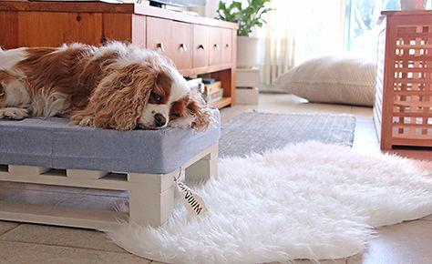 מיטה לכלב