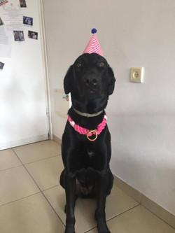 כלב יומהולדת מדגמן קולר