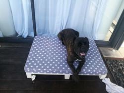 רוקי מדגמן מיטה גדולה