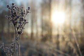 alggras-frost.jpg