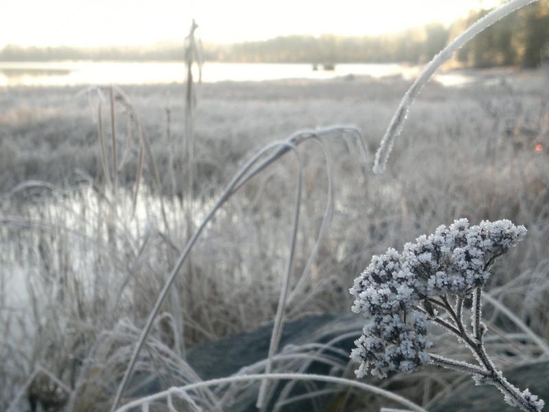 frostig-okotber-2011-0061-e1448008107831