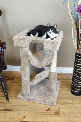 Premier Cat Scratch & Lounge
