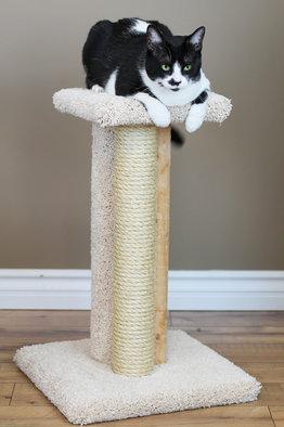 Premier Triple Cat Scratcher