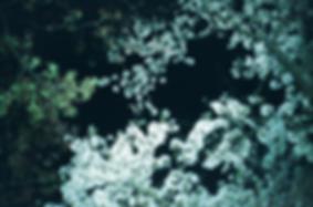 IMG_20190413_0067-1.tif