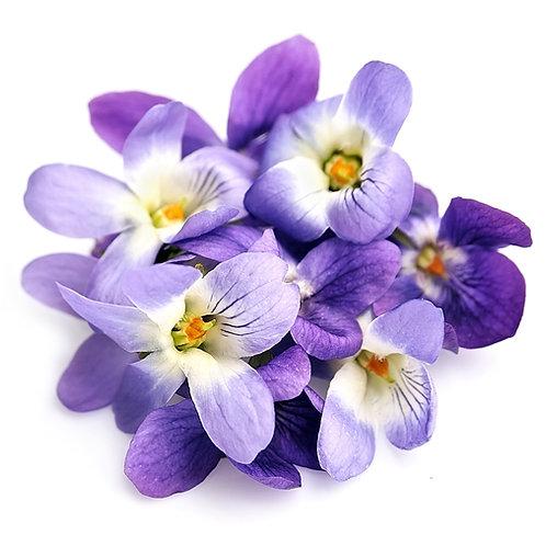 紫羅蘭 (Violet) - 10ml