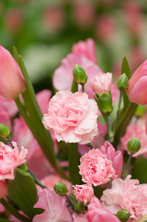 康乃馨 (Carnation) - 10ml