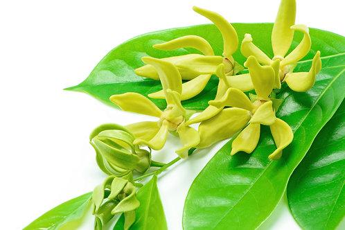 依蘭依蘭 (Ylang Ylang) - 10ml