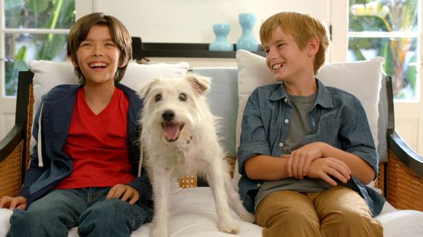 Linksys/Target - Family Dog